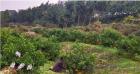 阆中市兄弟惠农果业种植专业合作社推动+互联网+新农产业发展